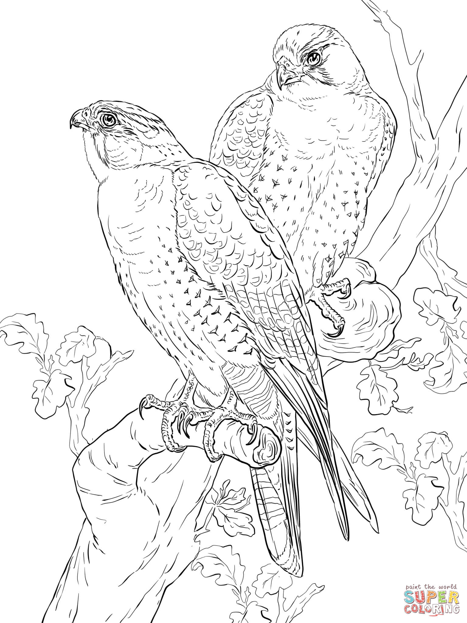 Peregrine Falcon coloring #20, Download drawings