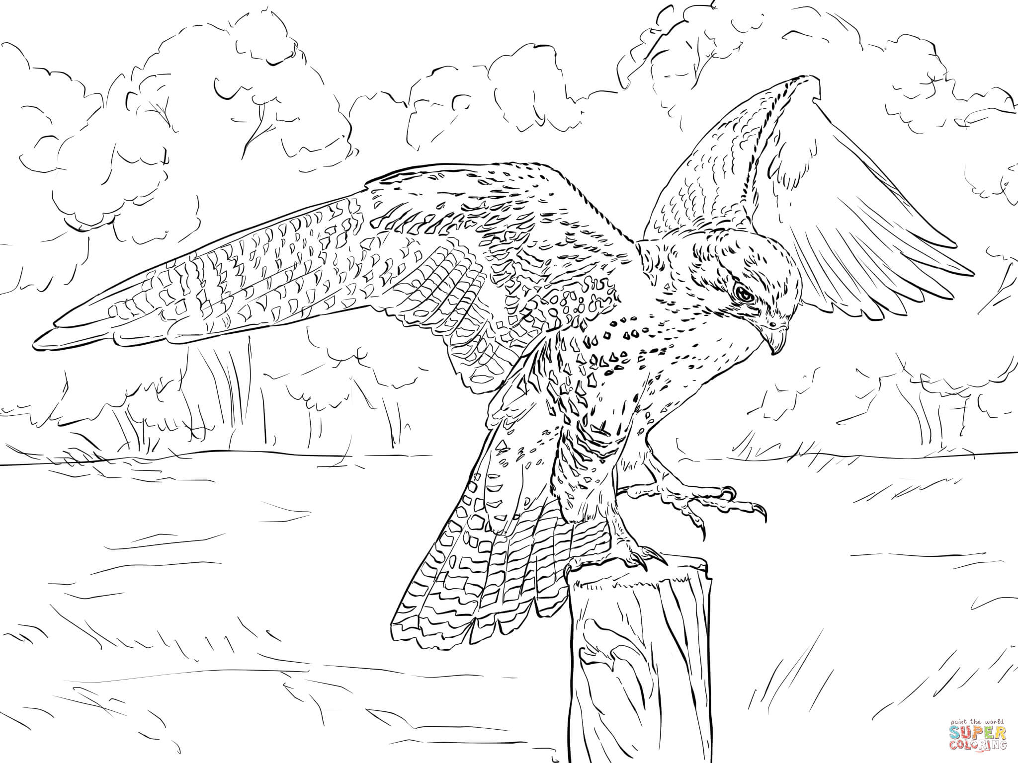 Peregrine Falcon coloring #18, Download drawings
