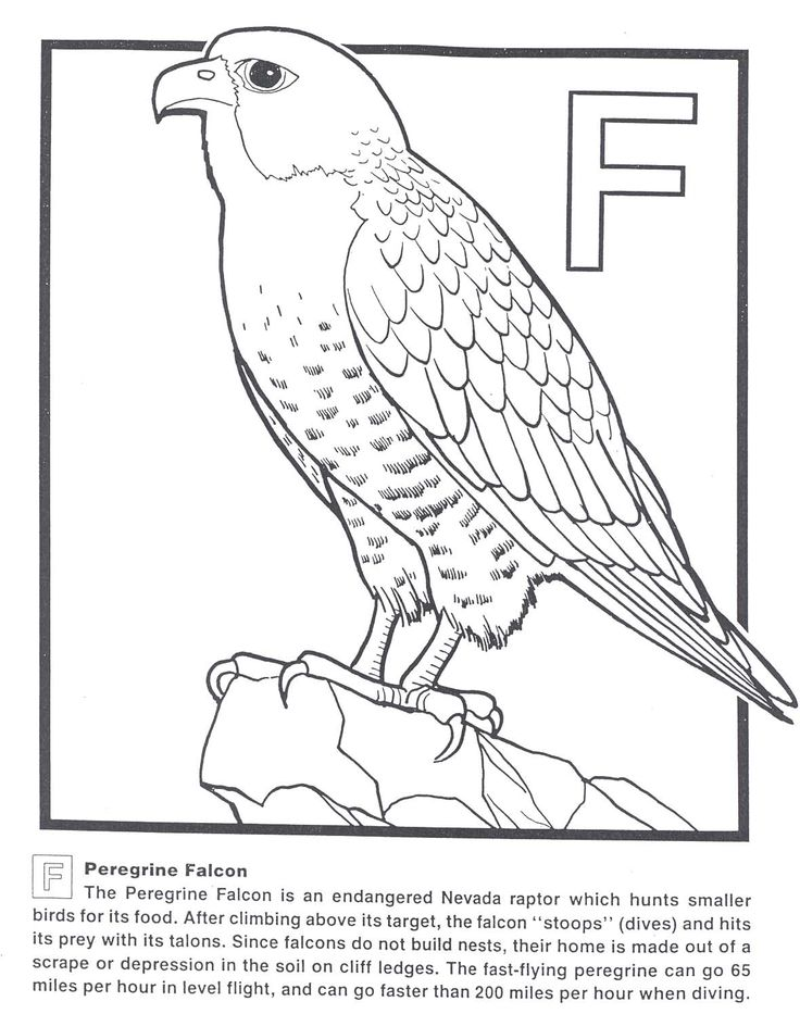 Peregrine Falcon coloring #15, Download drawings