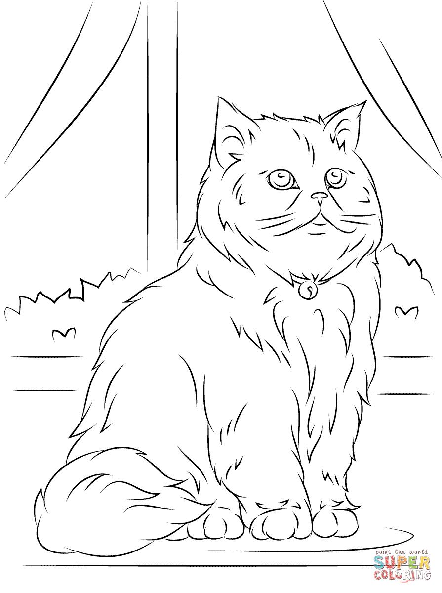 Persian Cat coloring #6, Download drawings