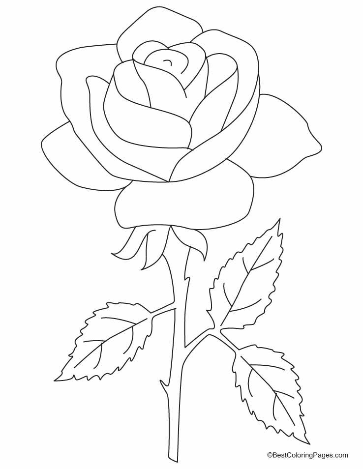 Petal coloring, Download Petal coloring for free 2019