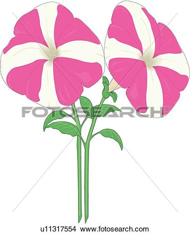 Petunia clipart #8, Download drawings