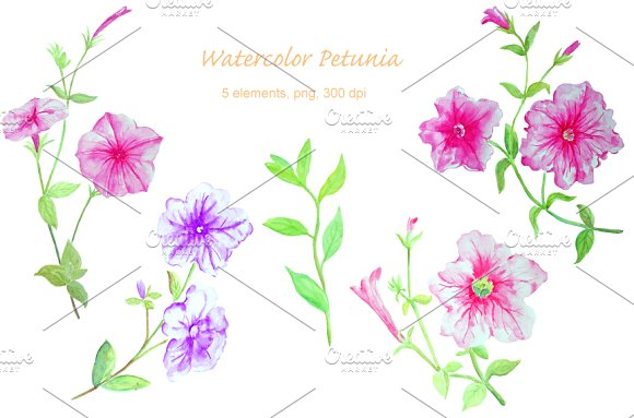 Petunia clipart #20, Download drawings