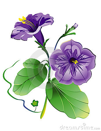 Petunia clipart #5, Download drawings