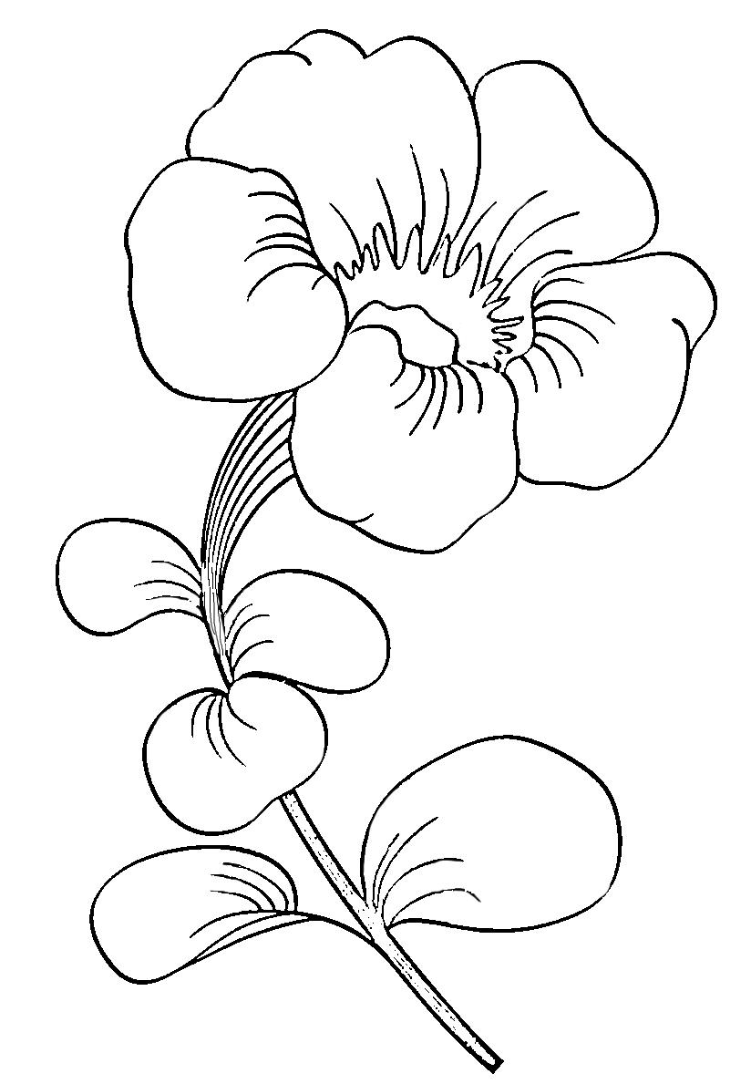 Petunia svg #5, Download drawings