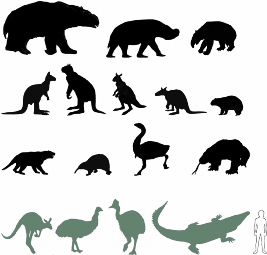 Phascolonus clipart #6, Download drawings