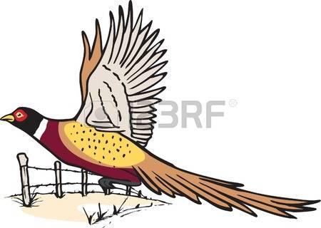 Pheasant clipart #6, Download drawings