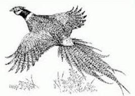 Pheasant clipart #4, Download drawings