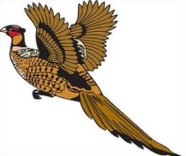 Pheasant clipart #18, Download drawings
