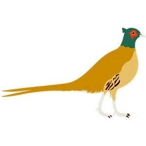 Pheasant svg #18, Download drawings