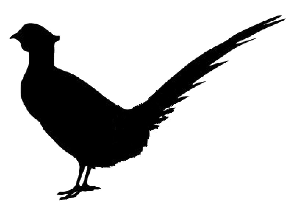 Pheasant svg #7, Download drawings