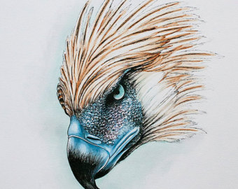 The Philippine Eagle clipart #9, Download drawings