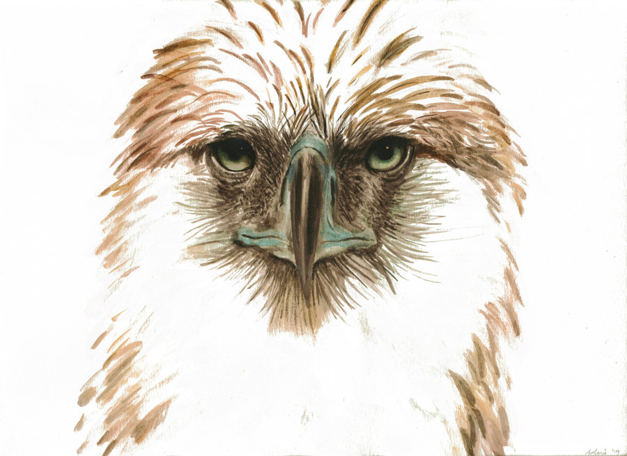 The Philippine Eagle clipart #8, Download drawings