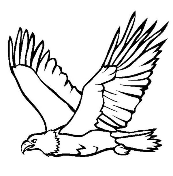 Philippine Eagle clipart #6, Download drawings