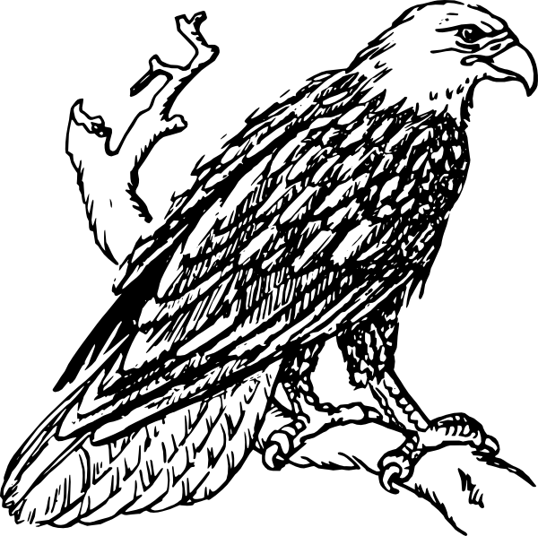 The Philippine Eagle clipart #13, Download drawings