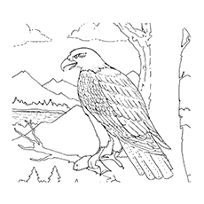 phillipine eagle coloring pages - photo#4