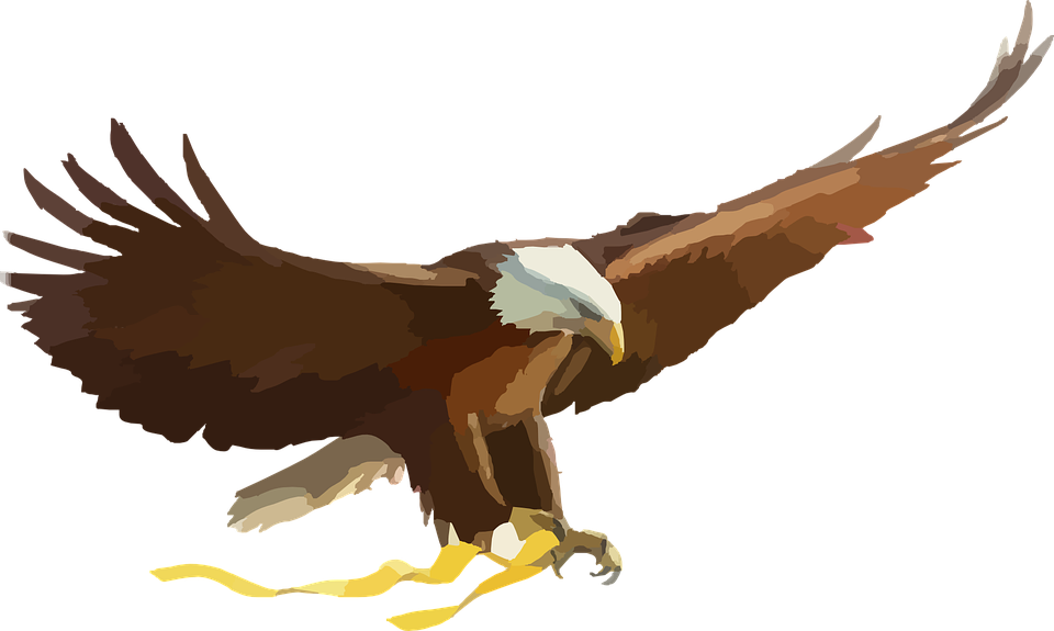 Philippine Eagle svg #12, Download drawings