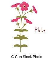 Phlox clipart #15, Download drawings