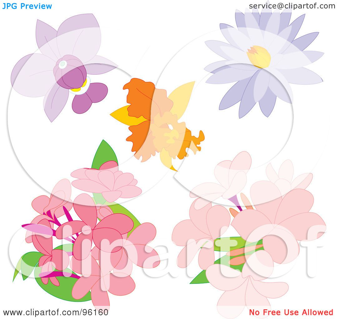 Phlox clipart #5, Download drawings