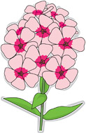 Phlox clipart #18, Download drawings