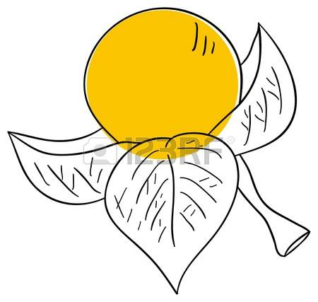 Physalis clipart #5, Download drawings