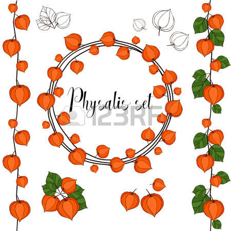 Physalis clipart #2, Download drawings