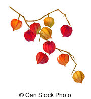 Physalis clipart #8, Download drawings