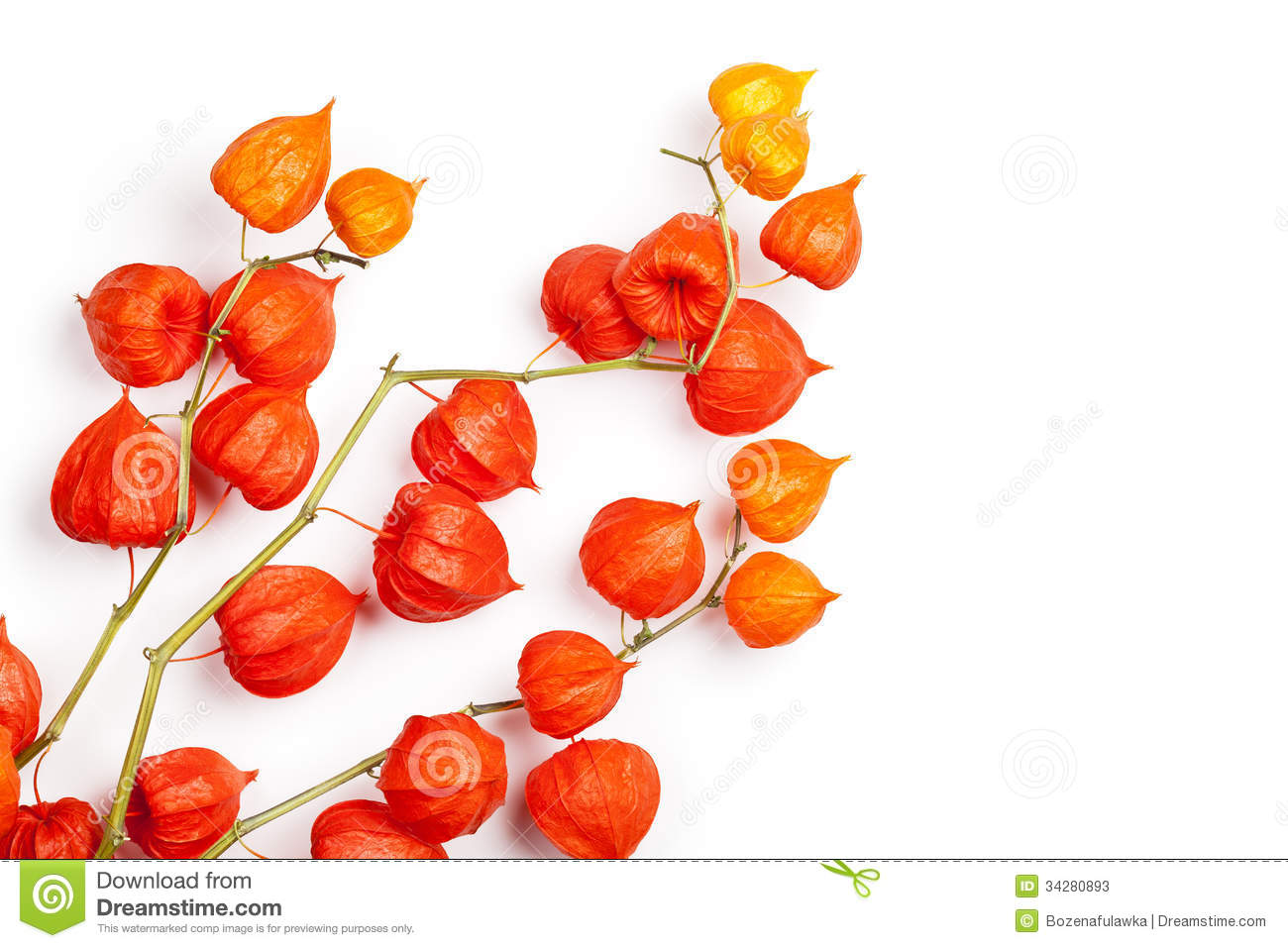 Physalis clipart #15, Download drawings