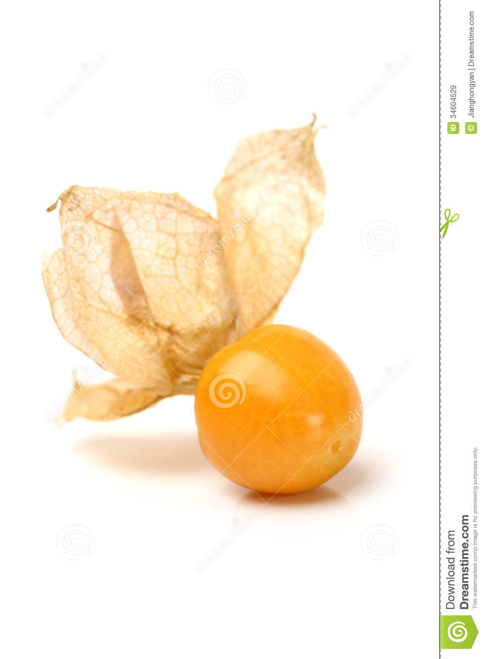 Physalis clipart #12, Download drawings