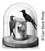 Picidae clipart #3, Download drawings