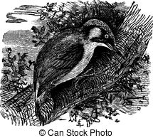 Picidae clipart #15, Download drawings