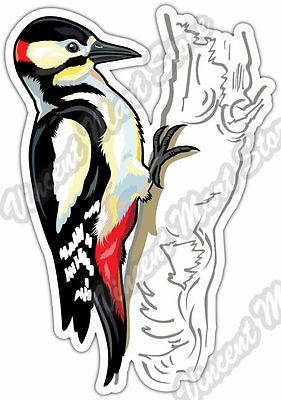 Picidae clipart #5, Download drawings