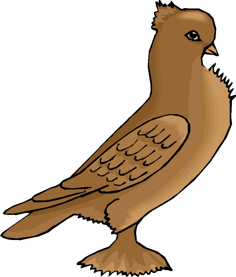 Pidgeons clipart #8, Download drawings