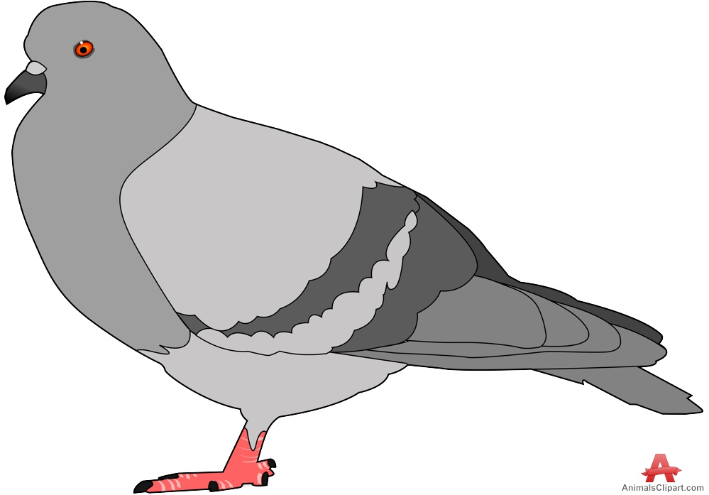 Pidgeons clipart #17, Download drawings