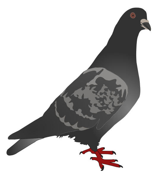 Pigeon clipart #17, Download drawings