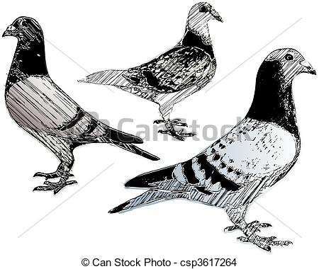 Pidgeons clipart #13, Download drawings