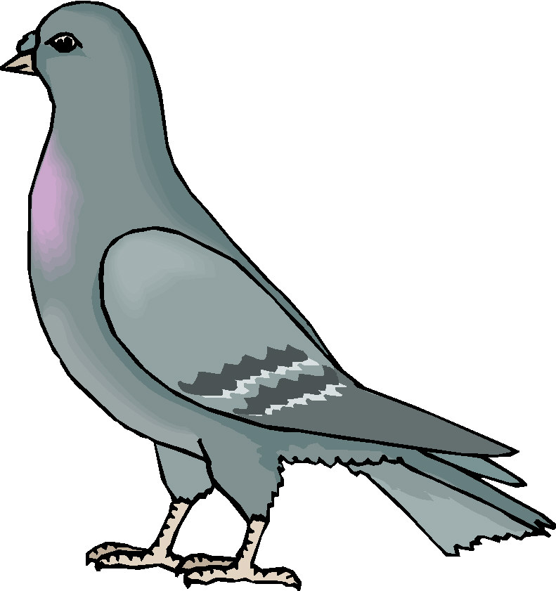 Pidgeons clipart #7, Download drawings