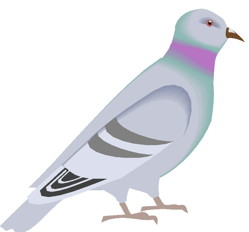 Pidgeons clipart #1, Download drawings
