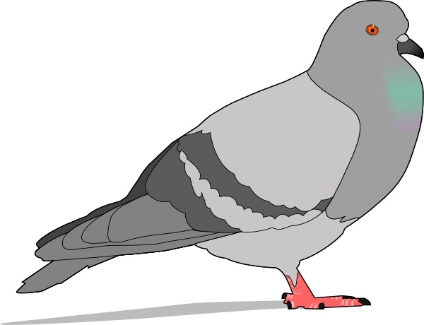 Pidgeons clipart #2, Download drawings