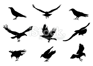 Pied Crow svg #9, Download drawings