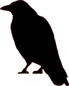 Pied Crow svg #18, Download drawings