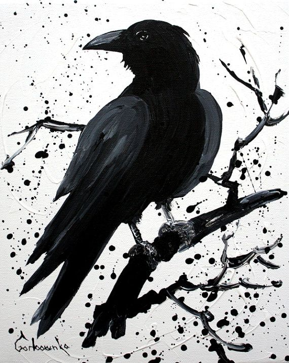 Pied Crow svg #13, Download drawings