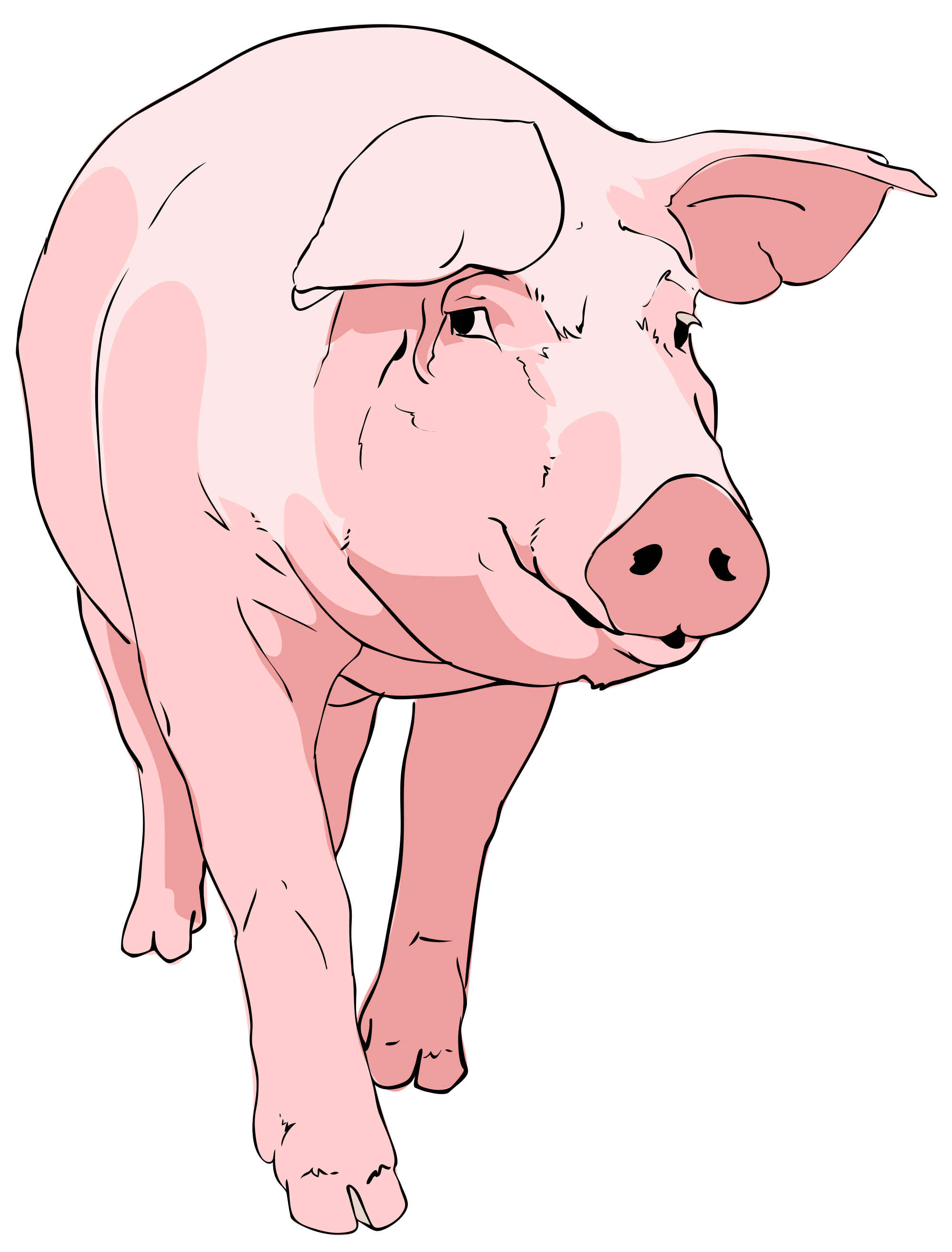 Pig clipart #1, Download drawings