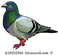 Pigeon clipart #6, Download drawings