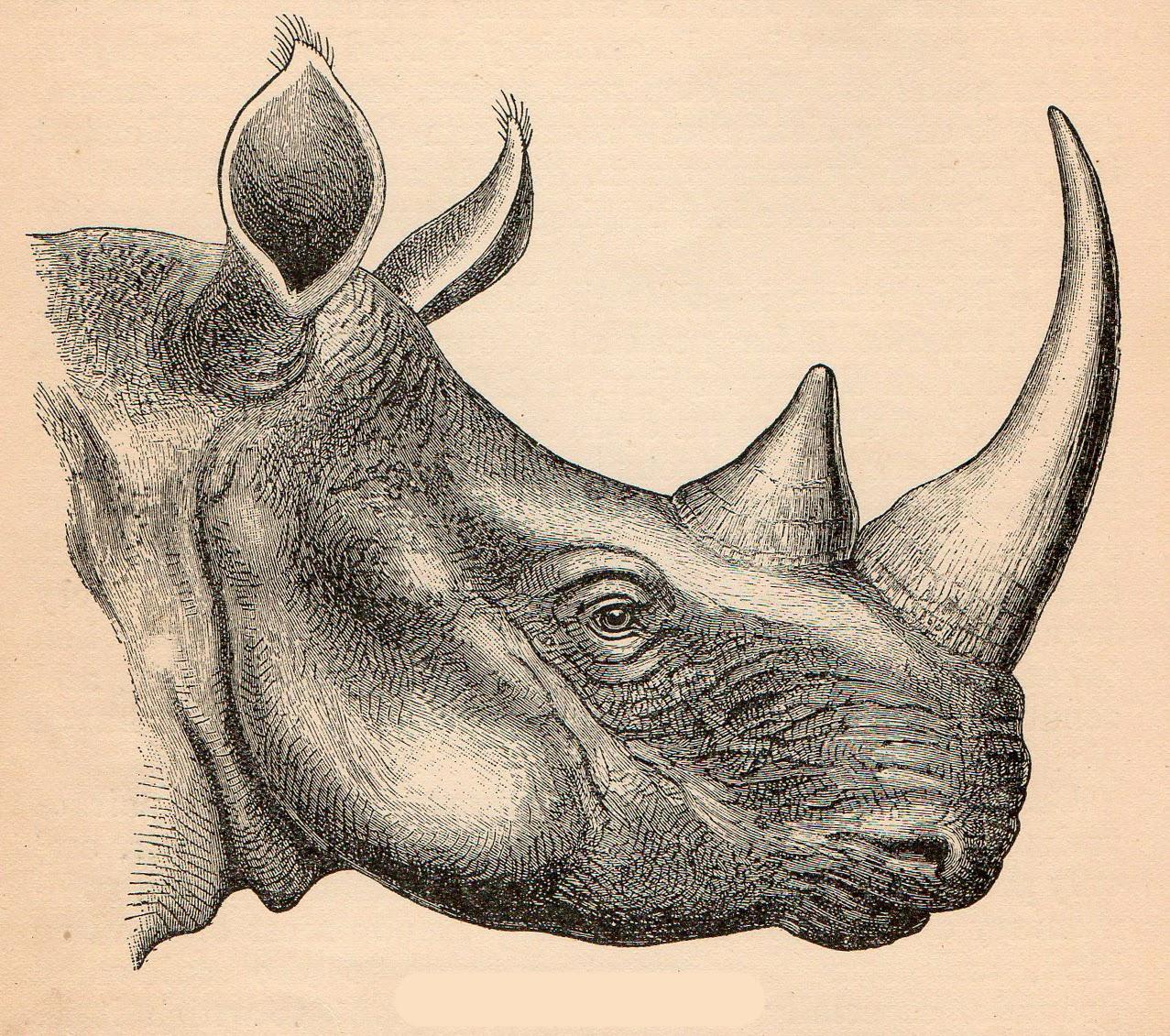 Pindi Moth clipart #4, Download drawings
