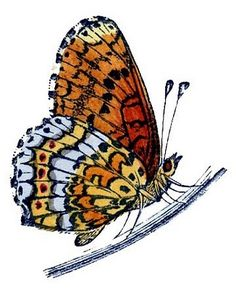 Pindi Moth clipart #11, Download drawings