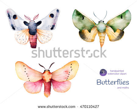 Pindi Moth clipart #19, Download drawings