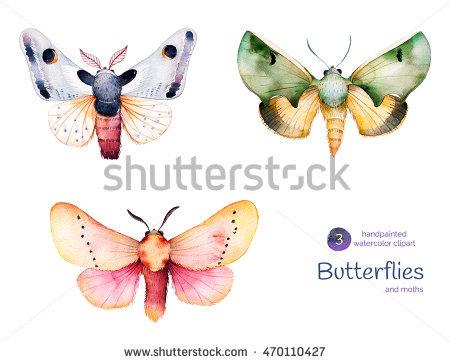 Pindi Moth clipart #2, Download drawings