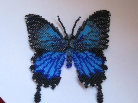 Pindi Moth clipart #18, Download drawings