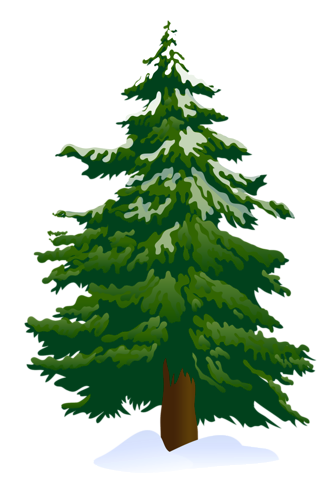 Pine clipart #9, Download drawings
